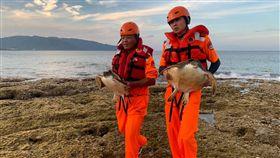 屏東風吹砂2隻海龜困漁網  海巡救援成功(1)海巡署第六岸巡隊興海安檢所8日接獲民眾通報,指屏東縣滿州鄉風吹砂近岸水域有2隻海龜受困漁網,海巡人員獲報前往成功救出2隻海龜。(海巡署提供)中央社記者郭芷瑄傳真  108年6月9日