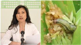 秋行軍蟲、KOLAS(合成圖/左行政院提供、右翻攝自中國農業新聞網)