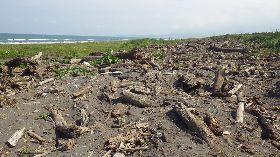 宜蘭五結漂流木臨時堆置場 24日開放
