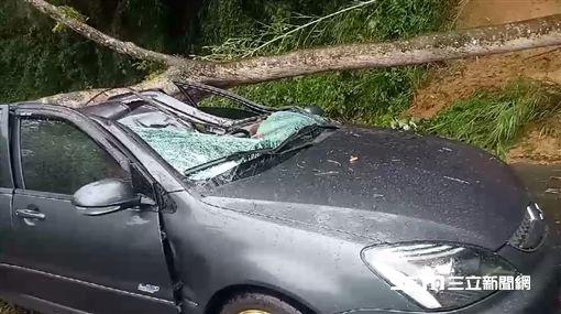 苗栗苗17線大龍村大樹倒塌壓毀一車釀一傷