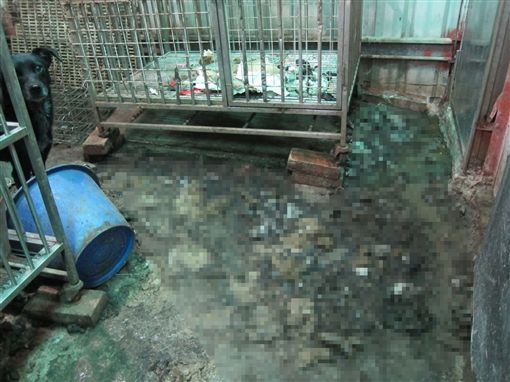 新北,淡水,毛小孩,貓,狗,動保法,飼養。翻攝自新北動保處官網