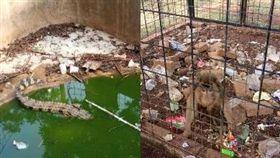 印尼雅加達最噁動物園。(圖/翻攝自推特)