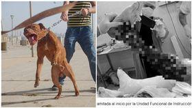 小偷闖空門失敗 遭2比特犬活逮…腿被啃爛見骨(翻攝自維基百科、Aire de Santa Fe )