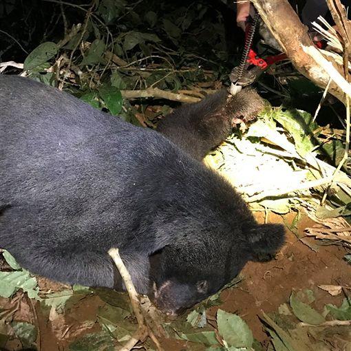 花蓮,台灣黑熊,陷阱,斷掌(圖/翻攝台灣黑熊保育協會)