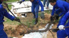 馬來西亞社區驚見3米巨蟒。(圖/翻攝自中國報)