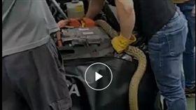 影/媽呀!雨刷卡住送修 竟拉出2公尺「大蛇」!車主嚇壞 臭青母