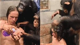 黑猩猩幫洗頭。(圖/翻攝自kodyantle ig)