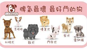 ▲脾氣最壞 最好鬥的狗狗(圖/愛你寵物網Lovepets)