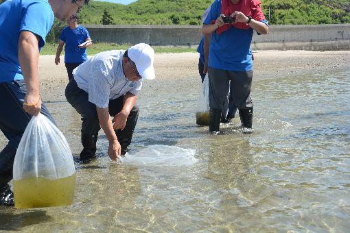 澎湖沙蟹苗放流 充實海洋資源(2)澎湖縣長賴峰偉推動海洋活化政策,19日在馬公青灣海域放流1萬5000隻沙蟹苗,並選在有天然海藻與海草床來放流,以增加存活率。中央社  108年6月19日