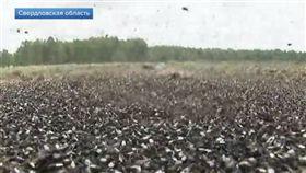 俄羅斯小鎮拉索勒維(Lazorevy)近日被蒼蠅大軍侵襲。(圖/翻攝自Новости на Первом Канале YouTube)