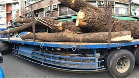 警察到場也沒用! 湳雅夜市珍貴樟樹 慘遭建商大卸八塊(圖/何博文臉書)