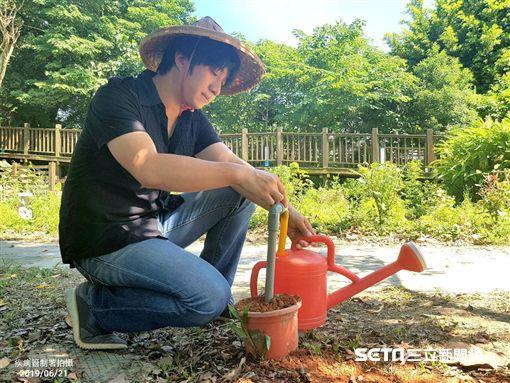 疾管署說,現在都市菜園改以水龍頭取代儲水桶,避免病媒蚊孳生。(圖/疾管署提供)