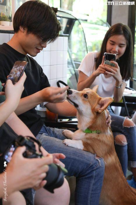 陳耀恩,Ean Chen,曼谷,咖啡店,柯基犬,CORGI IN THE GARDEN,柯基主題咖啡館