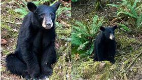 熊,動物,餵食,美國,安樂死,威脅,人類,自拍,接近, 圖/翻攝自推特