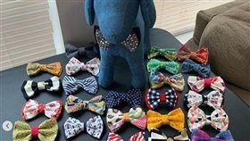11歲的他為浪浪做神奇領結「戴上就找到家」 創業開寵物時裝公司(圖/翻攝自sirdariusbrown IG)
