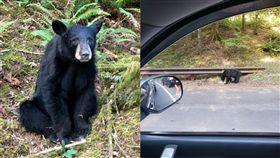(圖/翻攝自推特)美國,黑熊,小熊