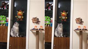 圖/翻攝自《愛貓聯盟》臉書