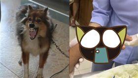 狗,發狂,泰國,中邪,溫馴,情緒,攻擊,綑綁,反抗,驚嚇, 圖/翻攝自臉書