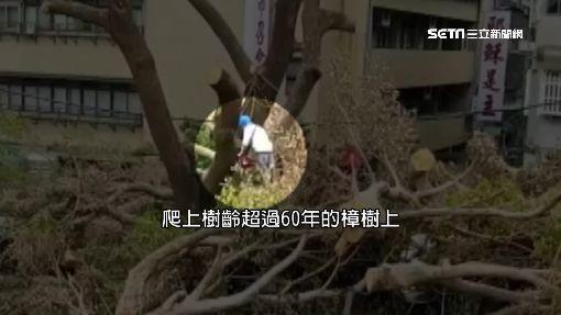 市府列「珍貴樹木」 建商無視官員強鋸