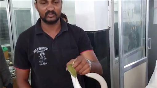 印度,毒蛇,睡覺,衣服內,地舖。翻攝自Multimedia LIVE