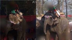 尼泊爾大象被象伕殘害。(圖/翻攝自PETA 亞洲善待動物組織 臉書)