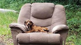 棄養,狗,沙發(圖/翻攝自Sharon Norton臉書)