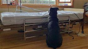 拉拉不知主人過世 堅守病床旁背影網淚崩(圖/翻攝自North Star Pet Rescue臉書)