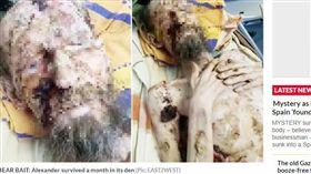 棕熊,食物,獵人,俄羅斯,乾屍 https://www.dailystar.co.uk/news/latest-news/787978/bear-attack-russia-alexander-survived-den-drank-urin