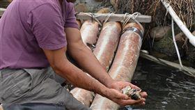 雲林文蛤異常死亡 養殖漁民叫苦雲林縣政府農業處指出,雲林縣文蛤養殖面積約3300公頃,年產量3萬公噸,年產值新台幣26億元,近年來文蛤異常死亡頻傳,使得育成率下降,養殖漁民叫苦。中央社記者葉子綱攝  108年6月25日