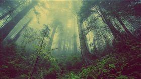森林(圖/pixabay)