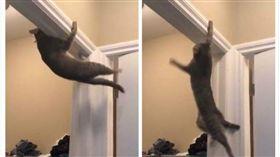 貓咪引體向上(圖/翻攝自Anthony Wheeler推特)