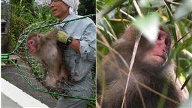 什麼!動物園裡的猴子居然會越獄,難不成是在拍電影《馬達加斯加》,日本沖繩一間動物園,在昨(27)日發生猴子集體大逃脫,導致園方緊急關閉園區,要將逃出的來的14隻猴子抓回去,但經過工作人員一整天半的努力,目前只尋回了其中7隻。(圖/翻攝自沖繩時報、琉球新報)