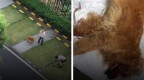 遛狗不栓繩被咬死!他怒打死「肇事犬」 2老人護犬遭打傷(圖/翻攝自時間視頻微博)