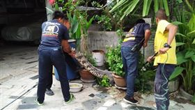 泰國,鱷魚,水巨蜥。(圖/翻攝自泰國世界日報)