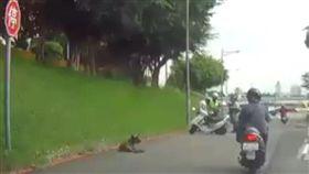 新北市張姓女騎士騎車行經堤外便道時,不慎撞上1隻突然衝出的黑狗,導致整個人噴飛撞到路旁石塊,送醫急救後仍未脫離險境(翻攝《爆料二社》)