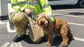 (16:9)當地消防單位將柏蒂救出。(圖/翻攝自Saffron Walden Fire Station臉書)