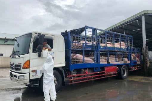 運豬車未加裝GPS  台南3天查獲4車違規台南市動物防疫保護處自7月1日起稽查活豬及屠體運輸車輛的即時追蹤系統(GPS),至3日為止查獲4車違規,已勸導改善。圖為稽查人員在肉品市場進行稽查與宣導。(台南市動保處提供)中央社記者楊思瑞台南傳真  108年7月3日