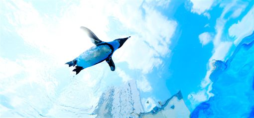 樂天市場,樂天旅遊,東京陽光水族館,Maxell Aqua Park,新江之島水族館,暑假,水族館 圖/翻攝自各水族館網站