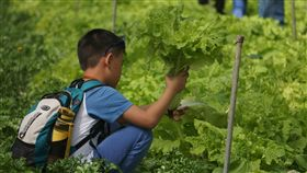 台大梅峰農場開放付費採蔬果體驗台大山地實驗農場又稱梅峰農場,即日起到8月31日舉辦「在地蔬食」園區開放活動,免預約,付費即可入場,民眾可採水蜜桃、李子、蘋果、萵苣、小白菜等蔬果。(梅峰農場提供)中央社記者蕭博陽南投傳真 108年7月3日