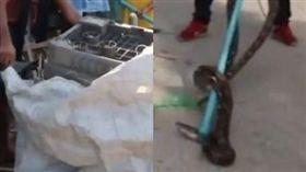 泰國,洗衣機,蟒蛇。(圖/翻攝自梨視頻)