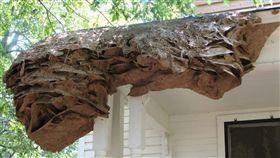 住家發現2公尺「超級蜂巢」!他想清被狂螫11次(圖/翻攝自推特)