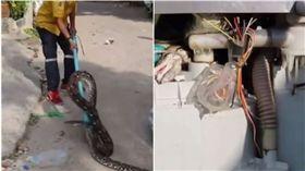 巨蟒,洗衣機,蟒蛇,泰國(圖/翻攝自梨視頻)