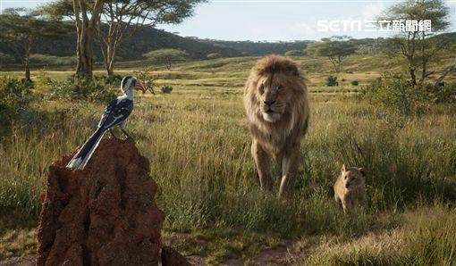 獅子王 迪士尼提供