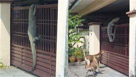 蜥蜴,四腳蛇,狗,名牌,樂透,狗,馬來西亞,鱷魚,門, 圖/翻攝自臉書