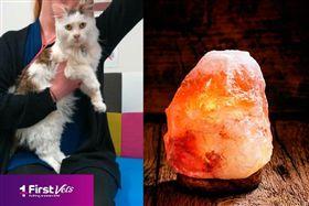 都是「鹽燈」惹的禍?小貓走路怪異、突失明耳聾 險丟小命 圖/First Vets 臉書