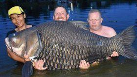 泰國,暹羅鯉魚,世界紀錄。(圖/翻攝自推特)