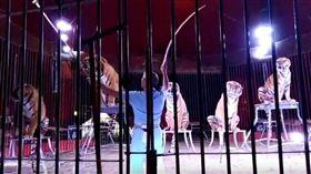 馴獸師進鐵籠…遭突襲「4老虎全撲上」 醫護看他被玩死 圖翻攝自youtube