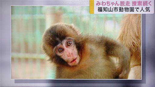 獼猴(圖/翻攝自推特)