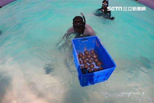 陳耀恩,Ean Chen,種珊瑚,魟魚餵食,馬爾地夫,悅榕度假村,海洋保育 勿用