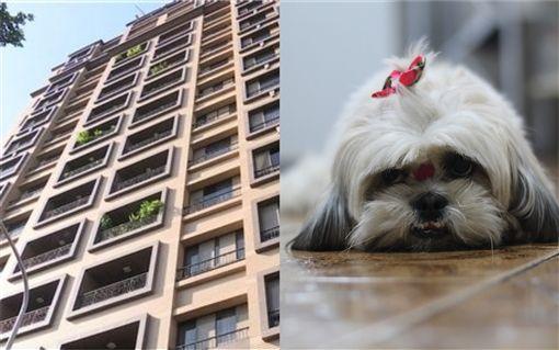 父親不滿女兒被狗咬傷,抓鄰居狗從12樓拋下。(組合示意圖/資料照、pixabay)
